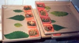 Kindergarten Homepage Herbarium Mit Blätter Und Herbstfrüchten